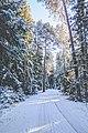Skaņākalna dabas parks, Mazsalaca, Latvia (Unsplash).jpg