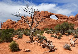 Skyline Arch at Arches National Park-Unburnsky.jpg