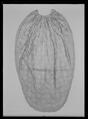 Släp av silverbrokad och silverspets till bröllopskläder från 1774 - Livrustkammaren - 44793.tif