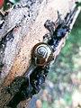 Snail in my backyard.jpg