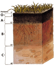 Darkened topsoil and reddish subsoil layers are typical in some regions.