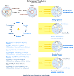 File:Solterrestriale Vocabulum (Solar-Earth Terms) 02.png