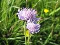 Some purple flower.jpg