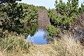 South beach state park pond.jpg