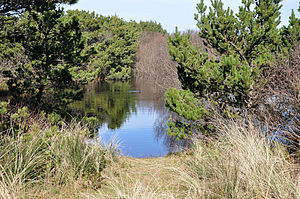 South beach state park pond.jpg
