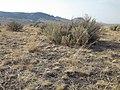 South of Marsing sagebrush steppe (I.O.N. cutoff) (9677453100).jpg