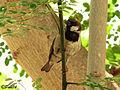 Sparrow perched.jpg