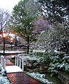 Spring? (451846832).jpg