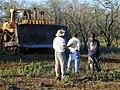 Starr-020323-0042-Zinnia peruviana-habitat and bulldozer Caterpillar D9R-Puu o Kali-Maui (23921368213).jpg