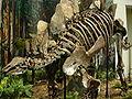 Stegosaurus at CMNH.jpg