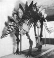 Stegosaurus ungulatus skeleton peabody museum 1910.png