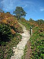 Steps to Leith Hill - geograph.org.uk - 1509750.jpg