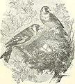 Stories about birds of land and water (1874) (14564175760).jpg