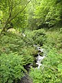 Stream through Bonhill Wood - geograph.org.uk - 1471548.jpg