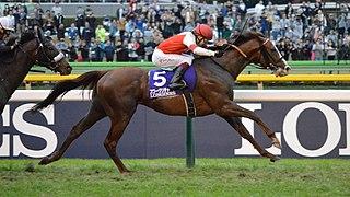 Suave Richard Japanese Thoroughbred racehorse