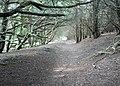 Sunken lane, Kingley Vale - geograph.org.uk - 1503612.jpg