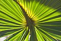 Sunlight through palm fronds (8298674692).jpg