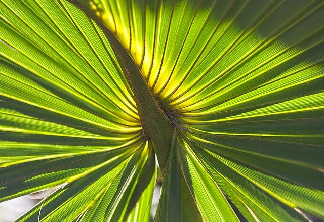 Slnečné svetlo je potrebné na fotosyntézu