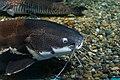 Sunshine international aquarium, Tokyo, Japan (281209597).jpg