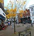 Sutton High Street trees (5).jpg