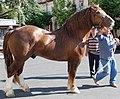 TPR horse.jpg