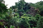 Tahitivegetation.jpg