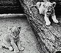 Taronga Park Zoo (26483211633).jpg
