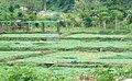 Taunggyi, Myanmar (Burma) - panoramio (16).jpg