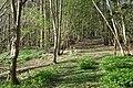 Temple Hill Wood, Warwick Castle Park - geograph.org.uk - 1252305.jpg