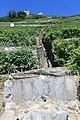 Terrasses de Lavaux - panoramio (71).jpg