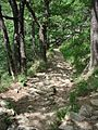Thale - Abstieg die Schurre von der Rosstrappe ins Bodetal - panoramio.jpg