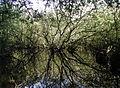 The Bog, Roos - geograph.org.uk - 269561.jpg