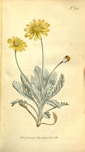Description de l'image The Botanical Magazine, Plate 306 (Volume 9, 1795).png.