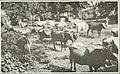 The Cuba review (1914) (14784649303).jpg