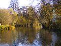 The River Breg - panoramio (1).jpg