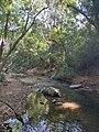 The Secret Beauty of Nature in Srilanka 31E09645-E6C3-430B-9BFA-4607A20B0E7A.jpg