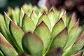 The Secret Lives of Plants (14918020476).jpg