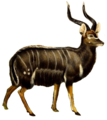 The book of antelopes (1894) Tragelaphus angasi white background.png