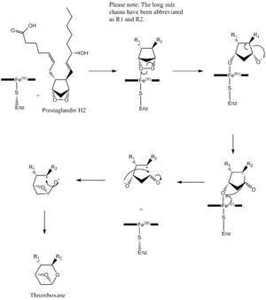 Thromboxane-A synthase - This isomerization mechanism shows prostaglandin H2 being converted to thromboxane. A heme group coordinated to a cysteine residue from the enzyme, thromboxane synthase, is involved in the mechanism.