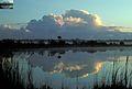 Thunderhead, NPSPhoto Van Nimwegen, Dec 78 EVER 1235 (9257948414).jpg