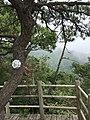 Tianmu Mountain Huangshan Pine.jpg