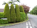 Topiary on Ballyhannon Road - geograph.org.uk - 465245.jpg