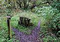 Track across disused Railway, near Horse Bridge, Staffordshire - geograph.org.uk - 594900.jpg