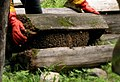 Traditional Honey making in Sichuan, China (cropped).jpg