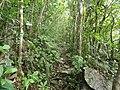Trail of Mount Furushi 201901 02.jpg