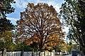 Tree Bowitschgasse 8, Hietzing.jpg
