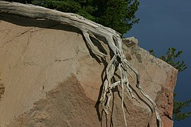 Tree Roots that Grabs Hold of a Rock Like a Hand.jpg