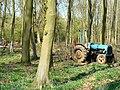 Tree felling, Cobham Frith (2) - geograph.org.uk - 1265329.jpg