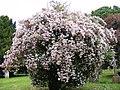 Tree in Blossom, St Catherine, Pettaugh - geograph.org.uk - 1346688.jpg