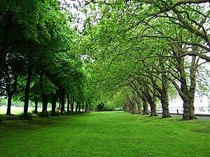 Wandsworth Park - Trees in Wandsworth Park